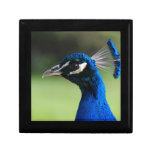 Peacock Gift Boxes