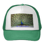 Peacock Hat life is full of surprises