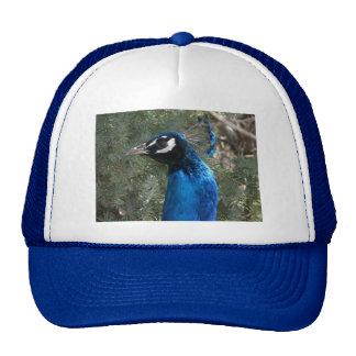 peacock head 2 trucker hat