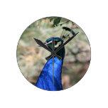 Peacock Head Closeup Clocks