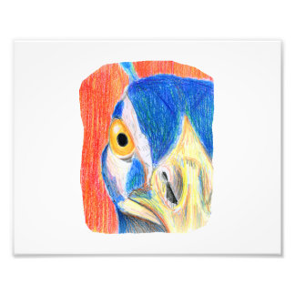 Peacock head colored pencil drawing sketch photo print