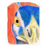 Peacock head colored pencil drawing sketch post cards