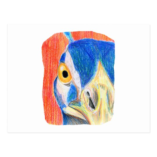 Peacock head colored pencil drawing sketch postcard