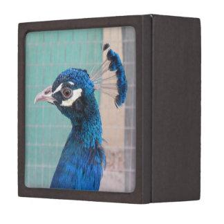 Peacock Head Small Gift Box
