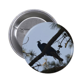 peacock in a tree pinback buttons