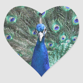 Peacock in Full Display Heart Sticker