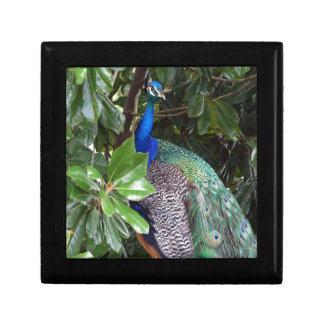 Peacock In Magnolias Gift Box