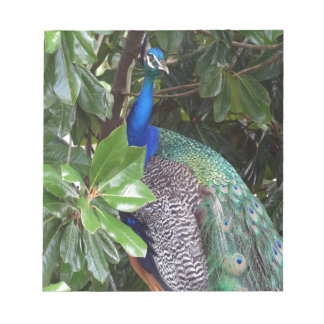Peacock In Magnolias Note Pad
