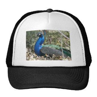 peacock in shrubs trucker hat