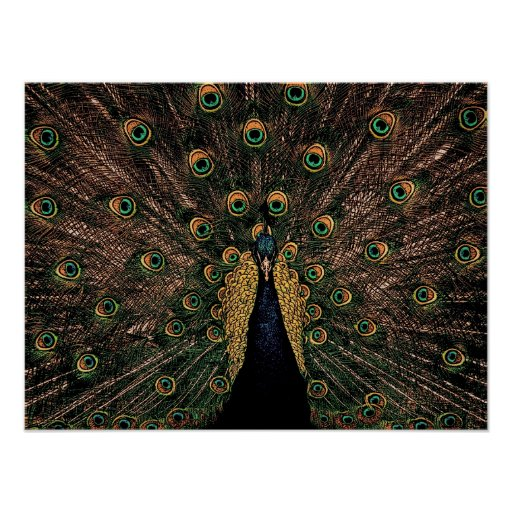 Peacock in Slightly Subdued Colors Poster