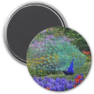 Peacock in Spring Flowers #2 Magnet