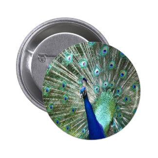 Peacock In Strut 2 Inch Round Button