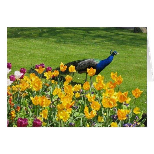 Peacock In The Garden Card