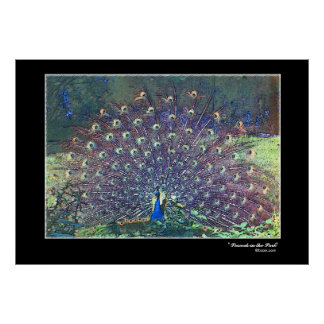 """""""Peacock in the Park"""" Poster"""