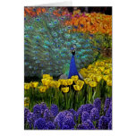 Peacock in Tulips Greeting Card