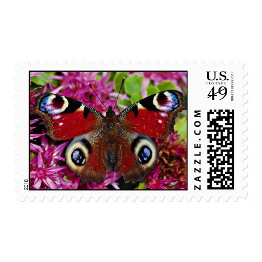 Peacock, Inachis io, Dyfed, U.K.  flowers Postage Stamp