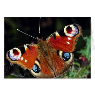Peacock, Inachis io, Dyfed, U.K. Greeting Card