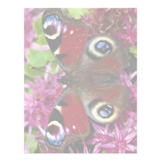 Peacock, Inachis io, Dyfed, U.K. Letterhead