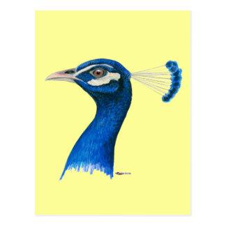 Peacock:  Indian Blue Postcard