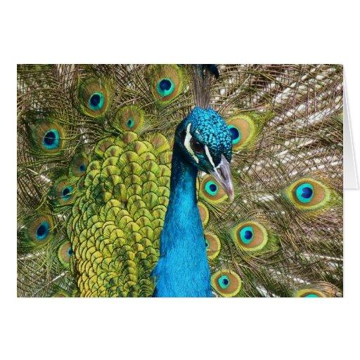 Peacock. indio felicitación