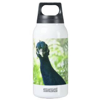 Peacock Insulated Water Bottle