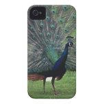 Peacock iPhone 4 Case