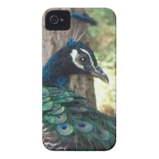 Peacock iPhone 4 Case-Mate Case