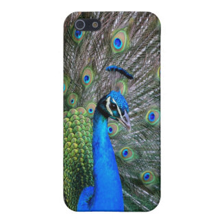 Peacock iPhone 5 Case
