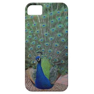 Peacock iPhone 5 Case
