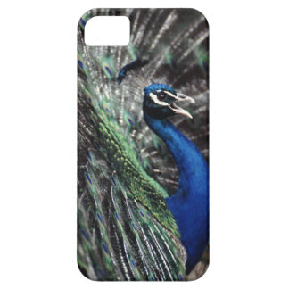 peacock iPhone SE/5/5s case