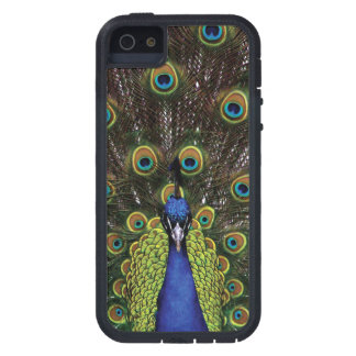 Peacock iPhone SE/5/5s Case