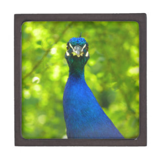 Peacock is watching you jewelry box