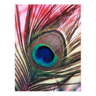 peacock.jpg postcard