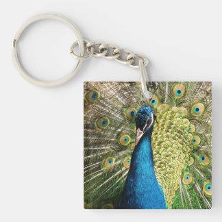 Peacock Square Acrylic Key Chain
