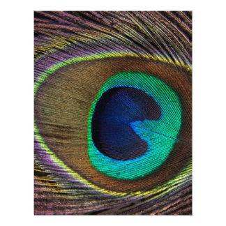 Peacock Letterhead Template