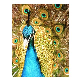 Peacock Letterhead