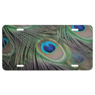 Peacock License Plate