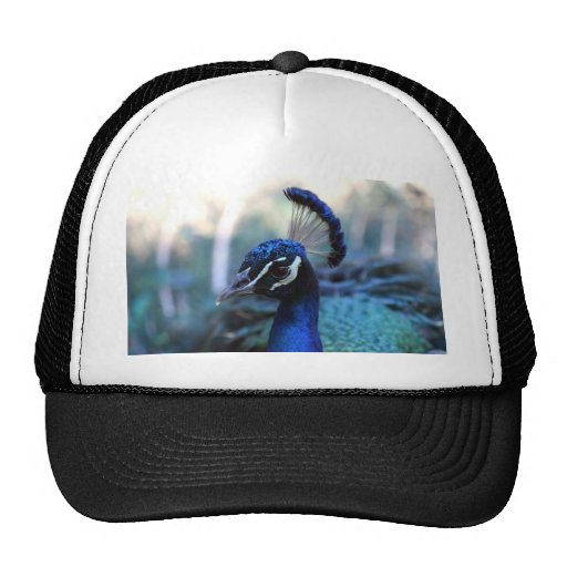 Peacock Male Headshot turned to the left Trucker Hats