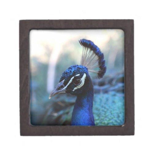 Peacock Male Headshot turned to the left Premium Keepsake Boxes
