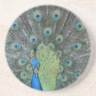 Peacock male in full fan photograph drink coasters