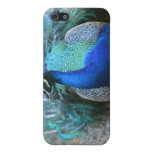 Peacock male on ground head turned left iPhone 5 covers