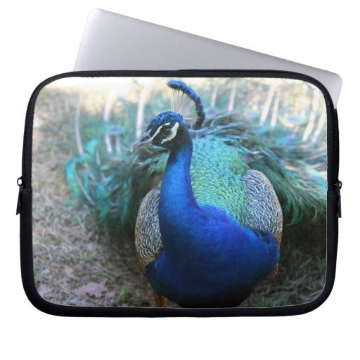 Peacock male on ground head turned left laptop computer sleeves