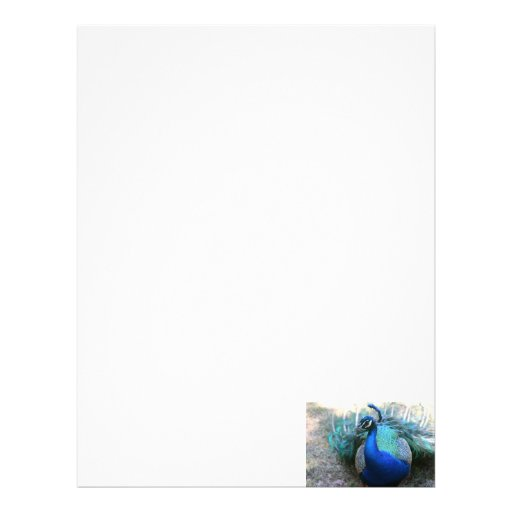 Peacock male on ground head turned left personalized letterhead