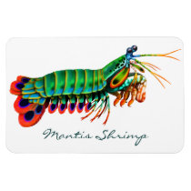 Peacock Mantis Shrimp Reef Animal  Magnet