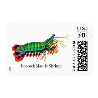 Peacock Mantis Shrimp Reef Creature Postage