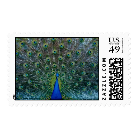 Peacock, medium stamps