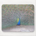 Peacock Mouse Mats