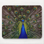 peacock mouse pads