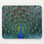 Peacock, mousepad