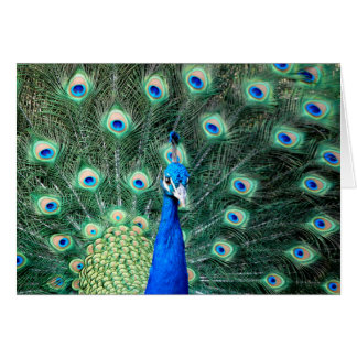 Peacock, note card